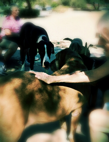 The sun-dappled dogs of Duffeeland...